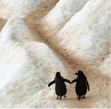 2 PENGUINS ON ICE