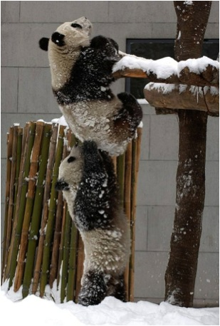 PANDAS 2 + SNOW