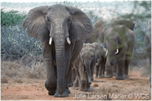 J2-ELEPHANT FAMILY
