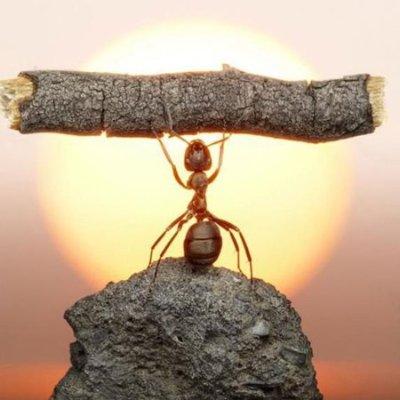 ANT LIFTING STICK
