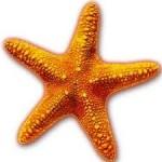 STARFISH 1