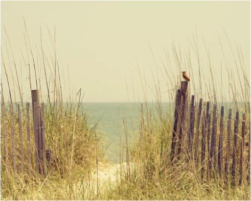 BEACH FENCE GRASS BIRD