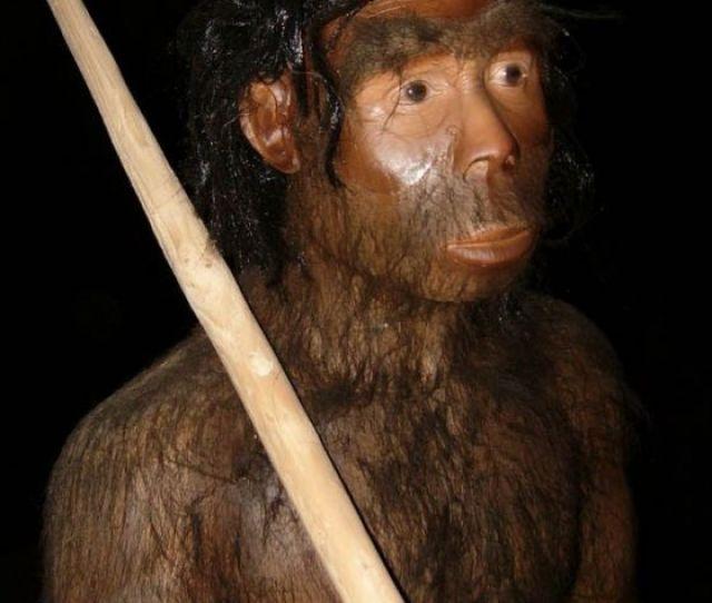 Jenis Jenis Manusia Purba Di Dunia Indonesia Gambar
