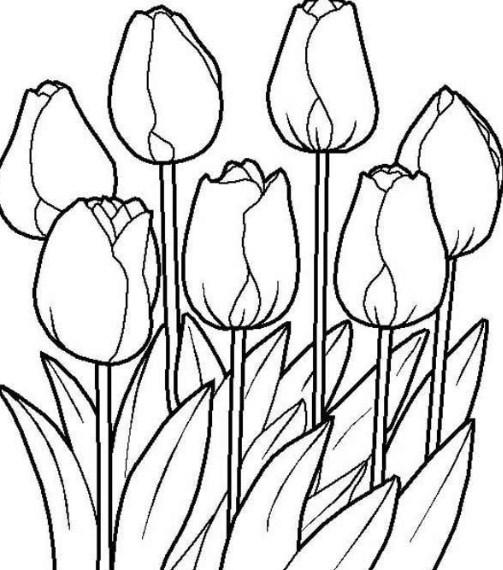 Gambar Sketsa Lukisan Bunga Cara Menggambar Bunga Sepatu Modern