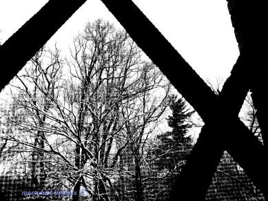 winter pane