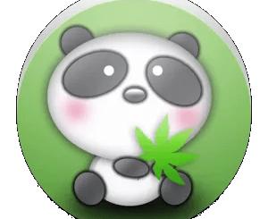 圓仔熊貓照片