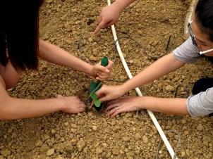 Gardening For Food: Transplanting seedlings