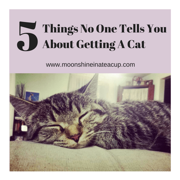 5 Things No One Tells You about Getting A Cat Moonshine In A Teacup