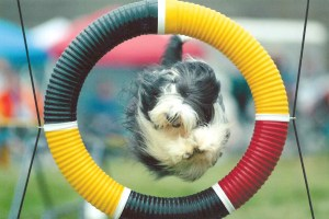 Photo from Heart's first ever agility run & Q 2003