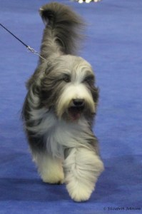 Spike at Eukanuba 2011