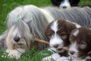 Shebang and her brown boys share a stick