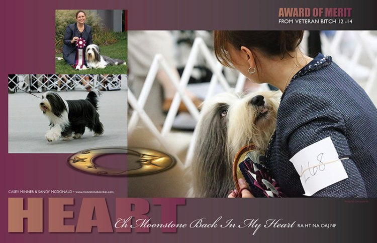 Heart's AOM ad from the 2013 BCCA National Specialty show
