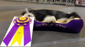 Scarlett takes a nap in her trophy for BISS