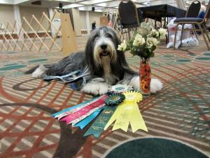 High Scoring Champion in Obedience 2015 BCCA National Specialty show
