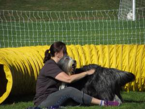Good butt scratching time waiting for the group picture after the 2015 Agility trial