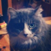 Basile, the King of my heart & Soul R.I.P