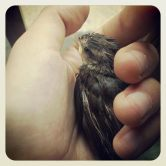 Loving bird, always tried to save you R.I.P