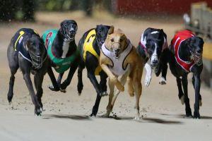 Dog Racing in Macau