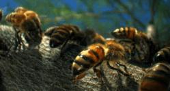 pollination 02