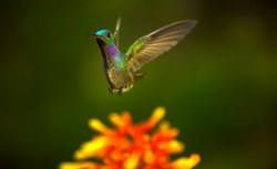 pollination 03