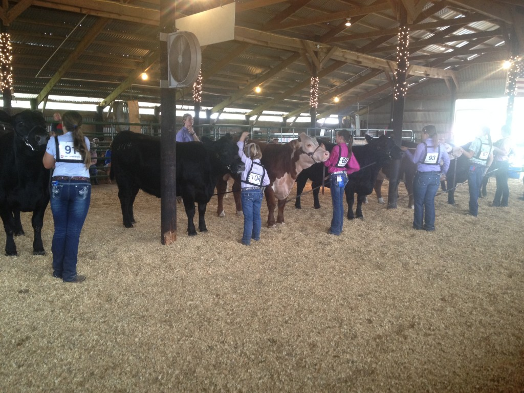 Moore County 4h Heifer And Goat Show A Success