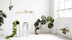 NONAGON-style-n9s-indoor-house-plant-green-garden-white-eco.jpg
