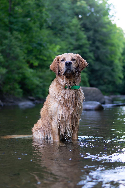 Mart Moose, Trout Stream Swim