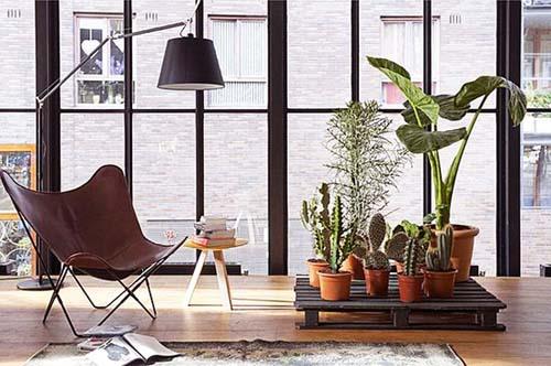 flores plantas habitacion minimalista