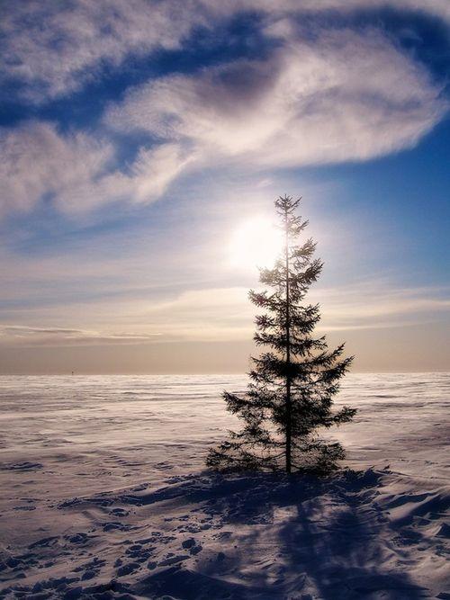 paisaje lapland finlandia