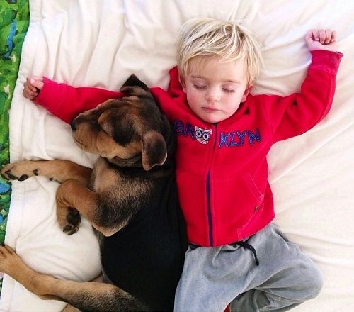 Theo y Beau descansando