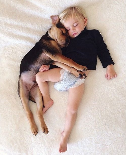 Theo y Beau en su siesta