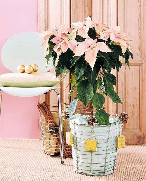 estilo decoracion de navidad flor de pascua (7)