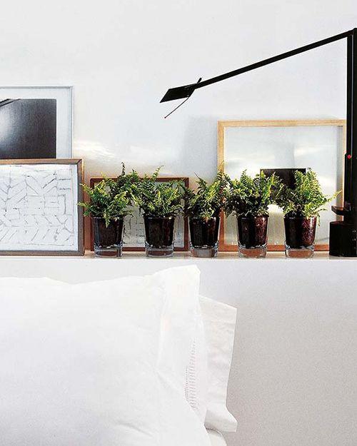 espacio con plantas lampara negra