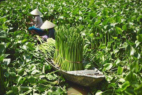 jacinto de agua indonesia coleccion sostenible ikea nipprig