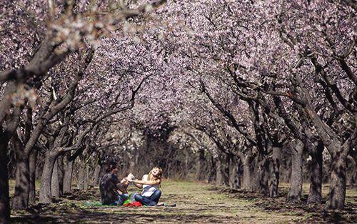 pareja aorque arboles flores almendros quinta de los molinos madrid