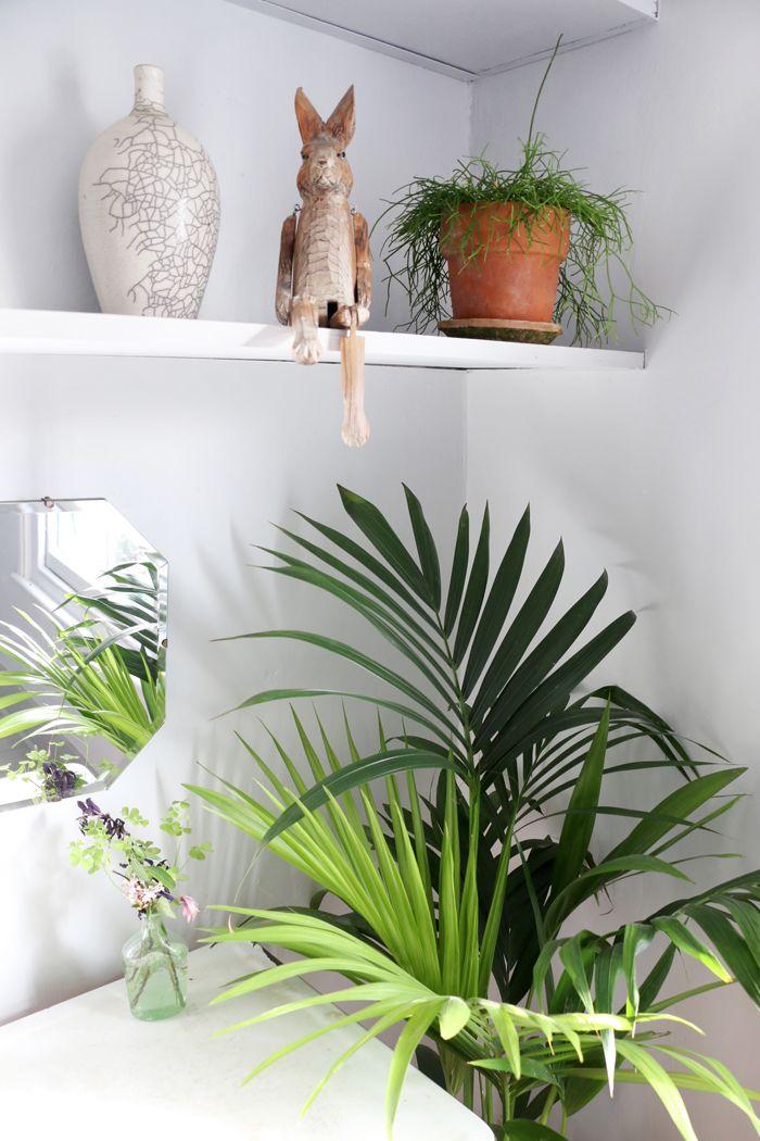 detalle planta palmera y adornos madera
