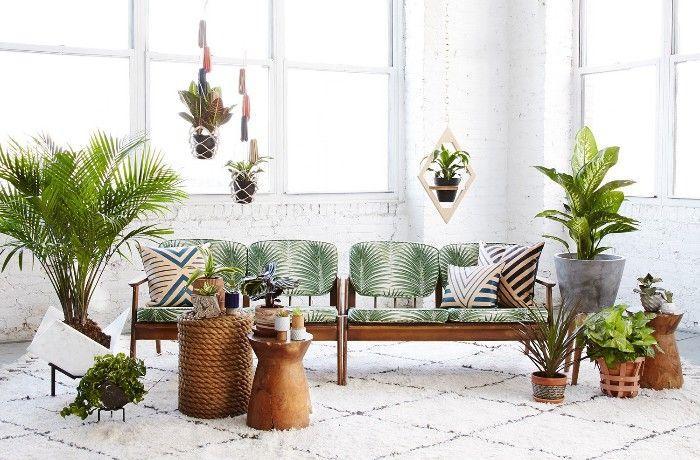Cinco beneficios de tener plantas en el hogar