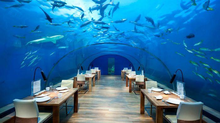 restaurante submarino peces
