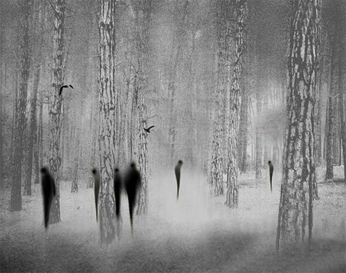 foto blanco y negro siluetas bosque