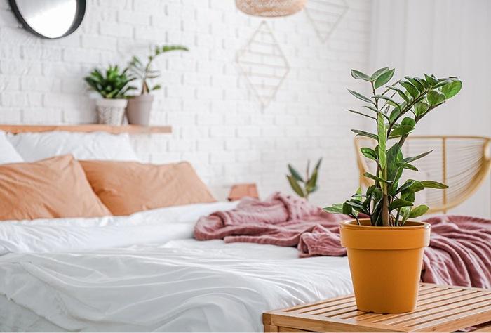 planta verde en dormitorio