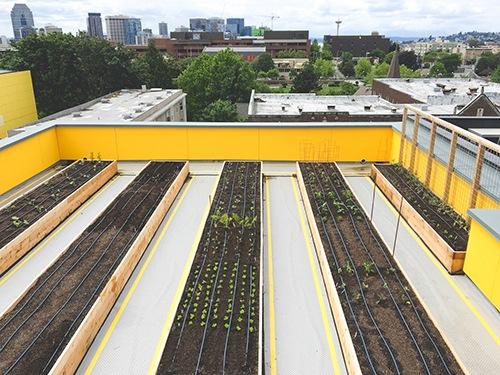Huerto comunitario del proyecto Capitol Hill en Seattle