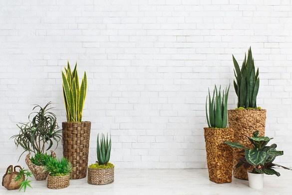 plantas de interiores varias colocadas contra la pared blanca