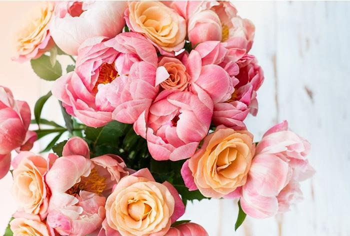 peonias rosas y amarillas