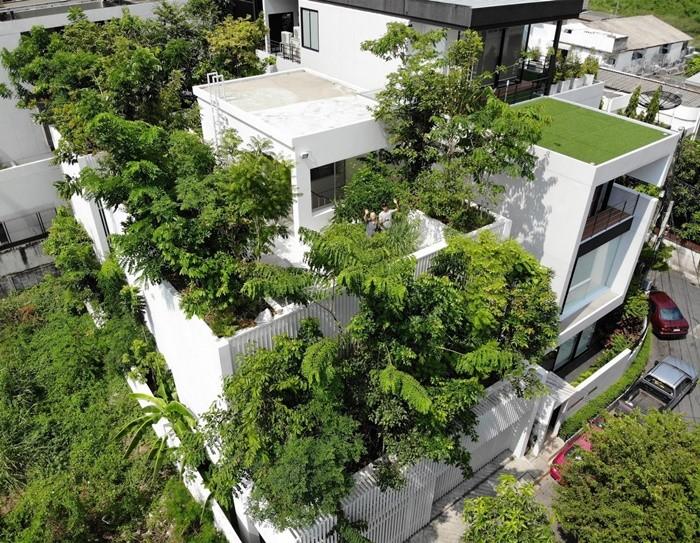 arboles verde casa azotea tejado