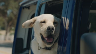 Photo of Jeep® Brand Launches First #JeepTopCanine Search: