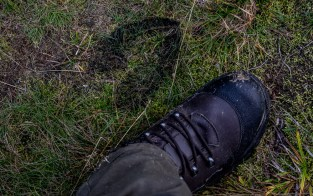I vilddjurens fotspår