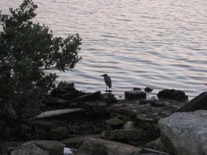 Bird watches sunset