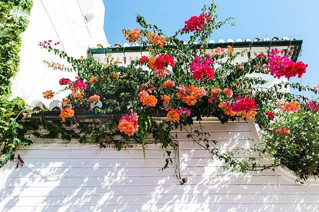 バルコニーの花
