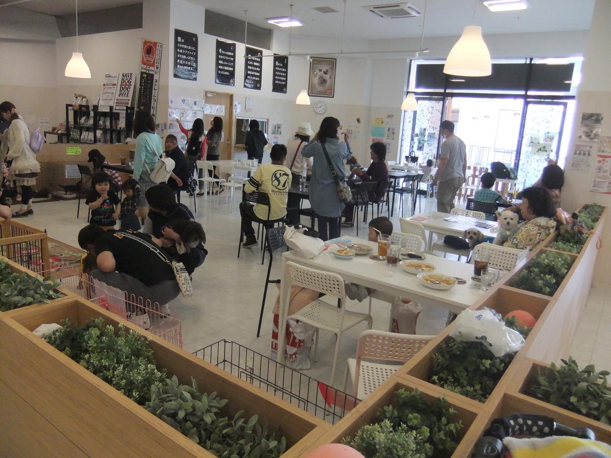 愛犬との新しい出会い方 知ってますか 保護犬のカフェ Hogoken Cafe