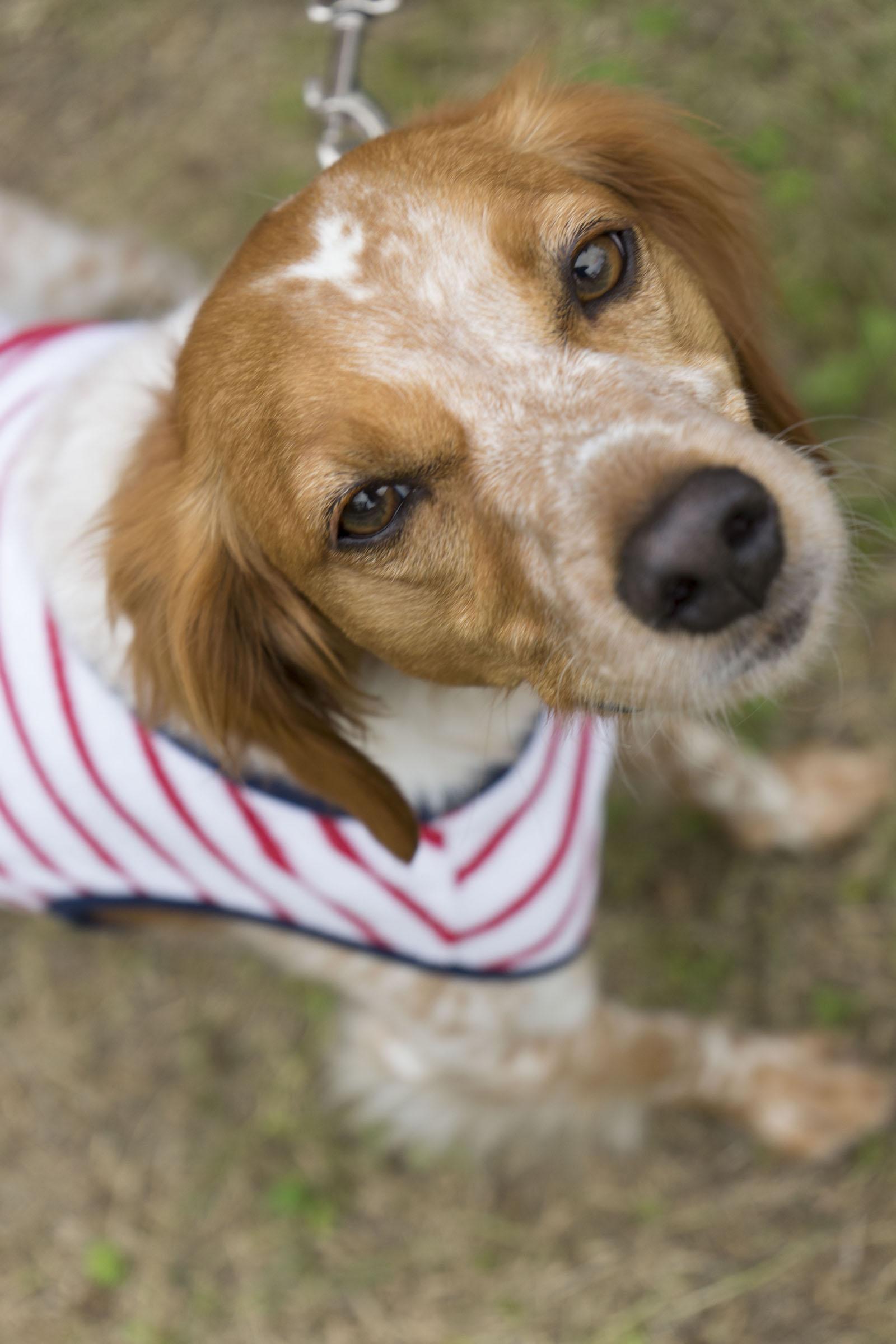 【モラキジメディア】実体験型の犬メディア&トリーツ専門店